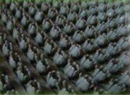 Коврик травка 60*45см серый