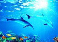 """Фотообои 4 листа """"Дельфины Х5""""Люкс ТП (136*194)"""