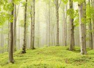 """Фотообои 9 листов """"Весенний лес Х5"""" Люкс ТП (291*204)"""